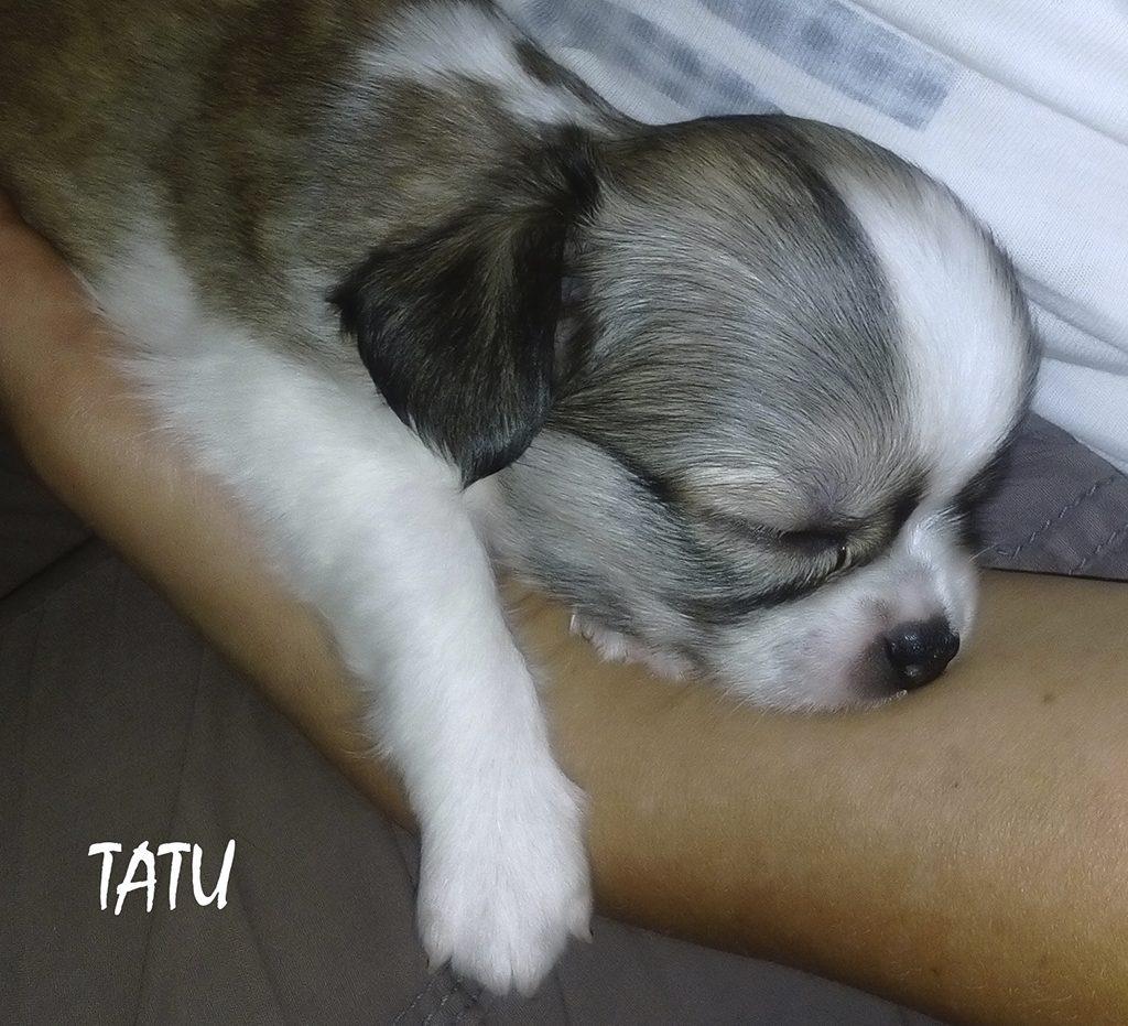 TAT 10