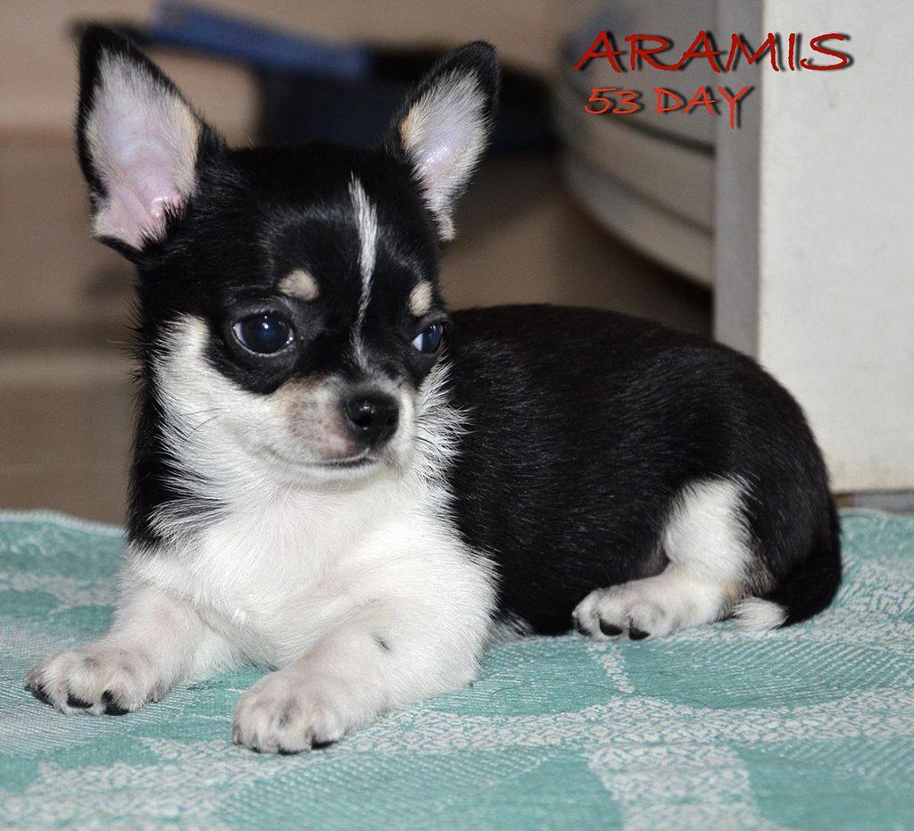 ARAMIS 8